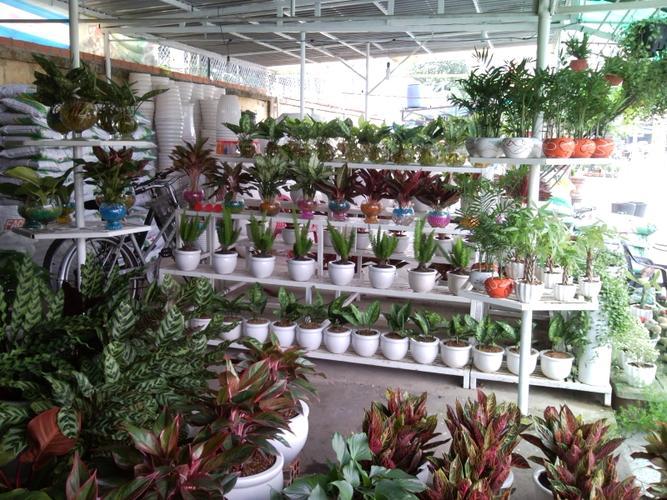 Kinh doanh cây cảnh mini, hoa mini và hạt giống