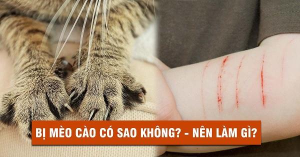 Mèo cào có nguy hiểm không? Bị mèo cắn có cần tiêm phòng không?